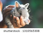 cute little bunny rabbit in... | Shutterstock . vector #1310565308