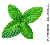 fresh mint leaf isolated on the ... | Shutterstock . vector #1310585192