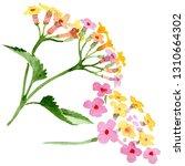 pink lantana floral botanical...   Shutterstock . vector #1310664302