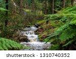 korumburra victoria australia... | Shutterstock . vector #1310740352