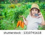child and vegetables on the... | Shutterstock . vector #1310741618