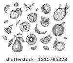 hand drawn different fruits... | Shutterstock . vector #1310785328