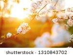 spectacular ornamental garden... | Shutterstock . vector #1310843702