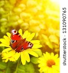 Bright Butterfly On Yellow...