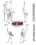 a set of images flamingo.... | Shutterstock .eps vector #1310930585