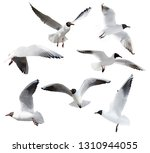 photo of black headed gulls... | Shutterstock . vector #1310944055