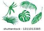 tropical palm leaves  monstera  ... | Shutterstock .eps vector #1311013385
