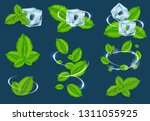 vector fresh mint leaf set.... | Shutterstock .eps vector #1311055925