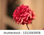 close up of a purple ball... | Shutterstock . vector #1311065858