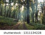 Natural Green Forest Landscape  ...