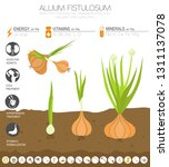 welsh onion beneficial features ... | Shutterstock .eps vector #1311137078