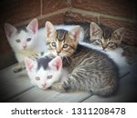 Stock photo four little kittens curled up in the corner outside on the deck 1311208478