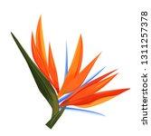 Strelitzia Flower. Single...
