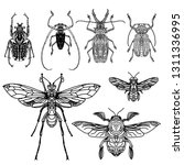 hand drawing set insect beetle. ... | Shutterstock .eps vector #1311336995
