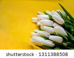 exquisite fresh white tulips on ... | Shutterstock . vector #1311388508