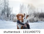 Dog Hugging. Pets In Nature In...