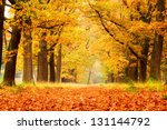 beautiful autumn forest in... | Shutterstock . vector #131144792