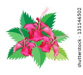 Beautiful Flower, An Illustration Group of Fresh Red Hibiscus Flowers or Bunga Raya on Green Leaves Isolated on A White Background