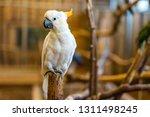 One Happy Cockatoo Parrot On...