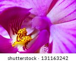 Extreme Macro  Pink Orchid...