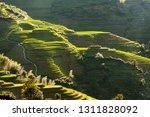 longsheng rice terraces... | Shutterstock . vector #1311828092