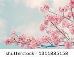 beautiful cherry blossom sakura ... | Shutterstock . vector #1311885158