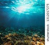 underwater coral reef on the...   Shutterstock . vector #1312017275