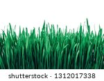 sprouts of green wheat grass on ...   Shutterstock . vector #1312017338