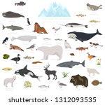 ice sheet and polar desert... | Shutterstock .eps vector #1312093535