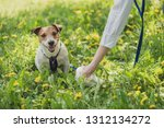 Stock photo pet owner picks up dog s poop cleaning up mess 1312134272