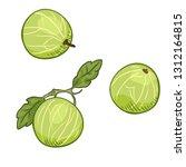 vector cartoon gooseberry... | Shutterstock .eps vector #1312164815