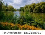 Black Eyed Susans Cattails And...