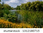 Black Eyed Susans And Cattails...