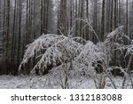 the branches of a hazel tree... | Shutterstock . vector #1312183088