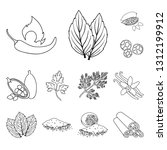 herb and spices outline icons...   Shutterstock . vector #1312199912