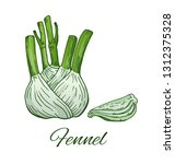 fennel hand drawn sketch. green ... | Shutterstock .eps vector #1312375328