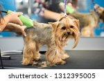 veterinarian trimming a... | Shutterstock . vector #1312395005