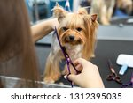 female groomer haircut... | Shutterstock . vector #1312395035
