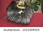 papillon dog in a beautiful... | Shutterstock . vector #1312509425