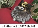 papillon dog in a beautiful... | Shutterstock . vector #1312509428