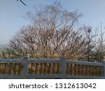 tree around the dome  khao... | Shutterstock . vector #1312613042