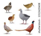 Birds Species  Hunting Season ...