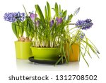 assortment of potted spring... | Shutterstock . vector #1312708502