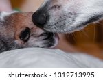 Stock photo dog mom with a puppy dog and puppy corgi 1312713995