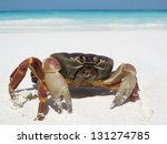 Crab on clean sand beach, sailing and travel on blue sea water wave ripple surface and coast background , Tachai island, Similan island group, Phang nga, Thailand