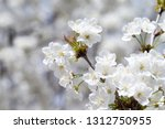 spring border background with... | Shutterstock . vector #1312750955