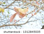 newly spring leaves on branches ...   Shutterstock . vector #1312845035