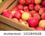 Organic Apples Harvest In...