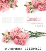 pink carnation isolated on white | Shutterstock . vector #131284622