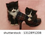 Stock photo two kittens in the shoe 1312891208